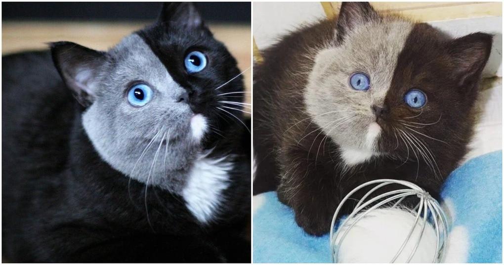 Очаровательный котенок с «двуликим лицом» вырос в удивительного кота