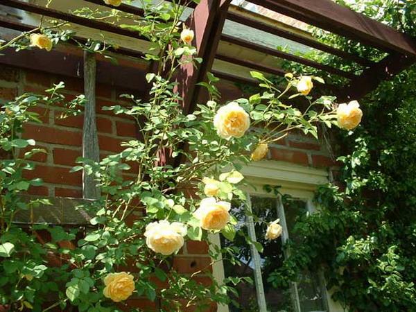 4497432_rosesingardeninspiration51 (600x450, 123Kb)