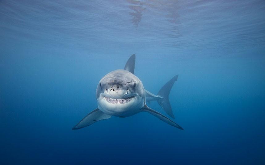 3134 Жизнь в океане   подводные фотографии Дэвида Флитэма