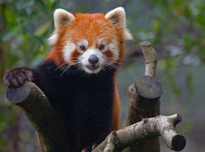 фото животные 9 (700x517, 297Kb)