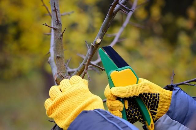 Вот какие плодовые растения нужно обрезать осенью
