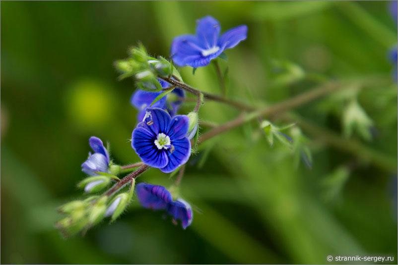Русская природа - цветы