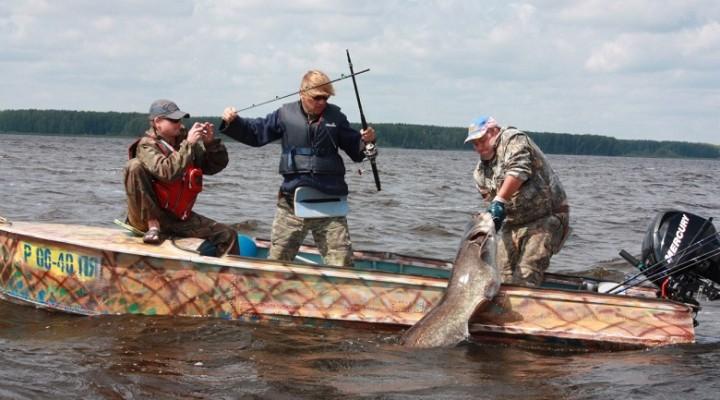 Кальмар — одна из лучших наживок для ловли сома