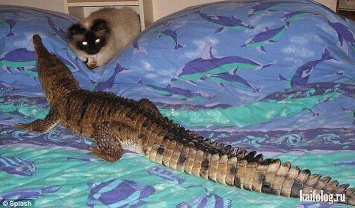 крокодил домашний фото
