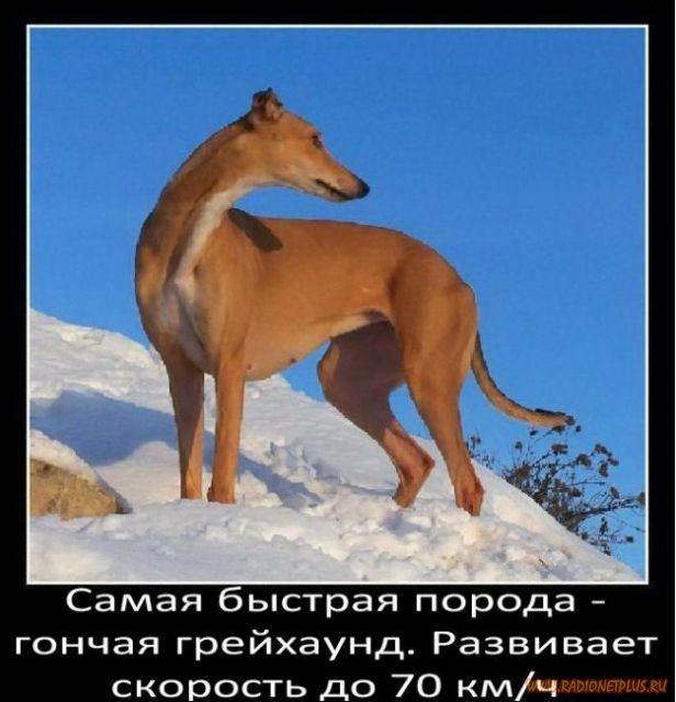 Факты о собаках в картинках