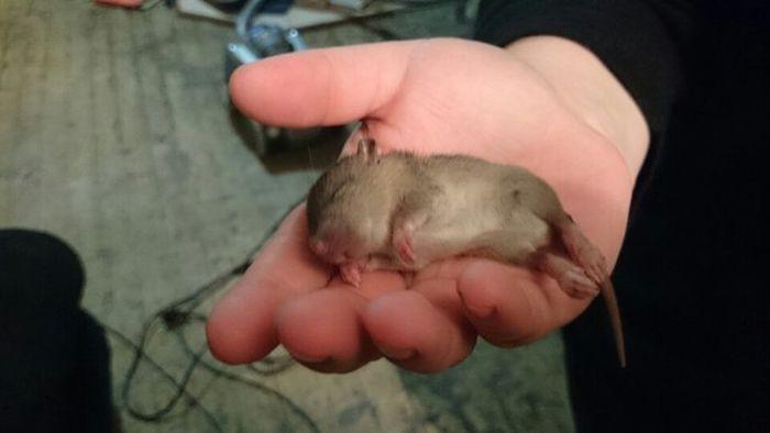Они никакие не миленькие и не хорошенькие животные, крыса, милота, позитив