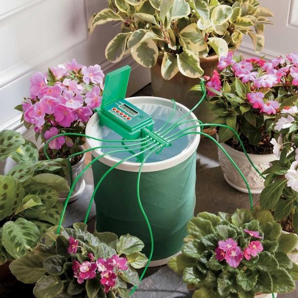 Как сохранить комнатные цветы, уезжая в отпуск!
