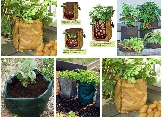 Выращиваем картофель в мешке
