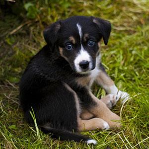 Советы тем, кто хочет завести щенка