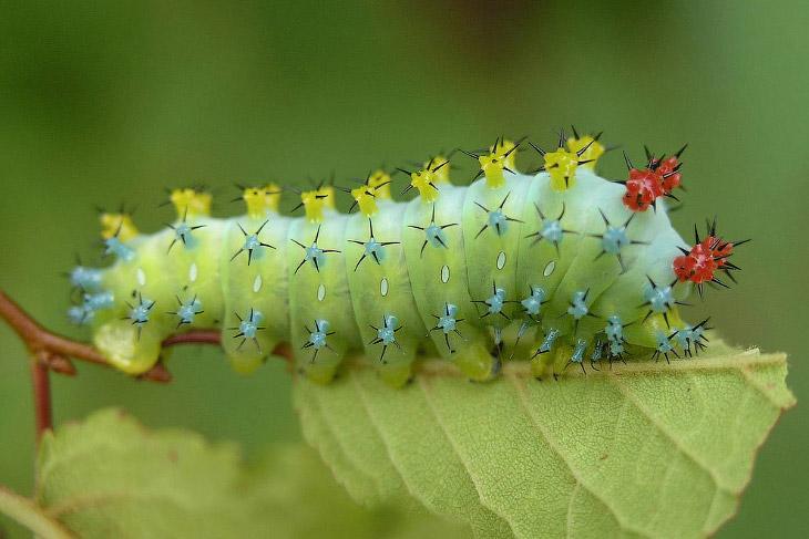 Бабочки и их гусеницы