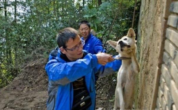 Китайские рабочие на одной из баз Благовещенска издевались над собакой, а потом убили ее...