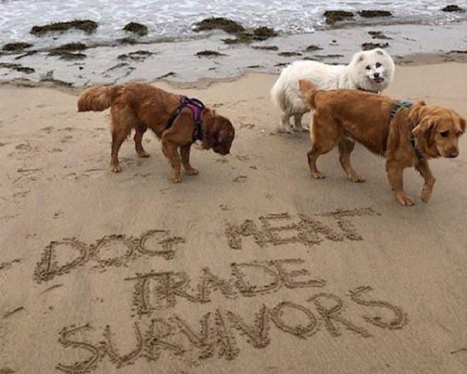 Трогательная история спасения: как студентка в одиночку выходила трёх больных собак
