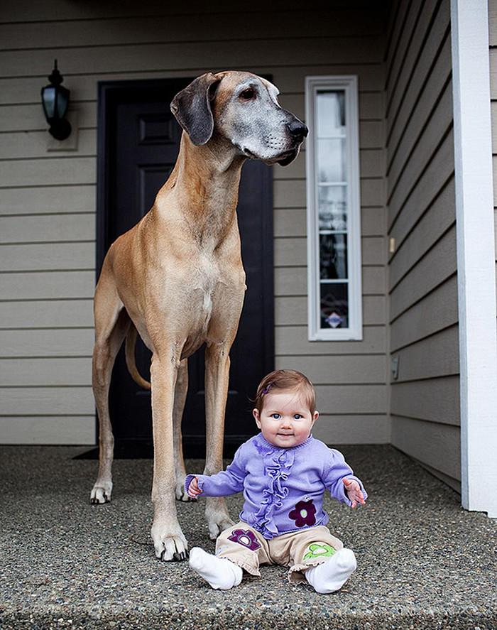 Разница в росте - не помеха дружба, ребенок, собака