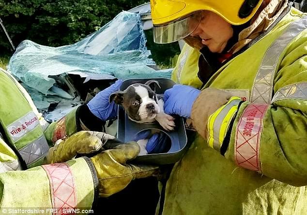 Пожарные больше часа спасали щенка из попавшего в ДТП автомобиля
