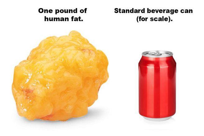 3. Один килограмм человеческого жира содержит примерно 7000 калорий. здоровье, интересно, факты
