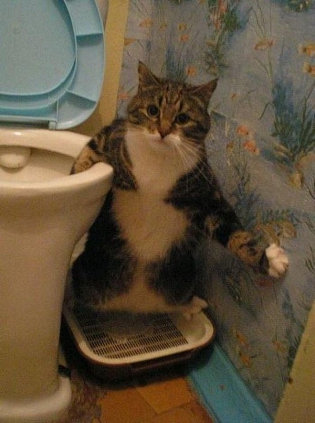 в доме нет кошки долго не живут Абхазии можно