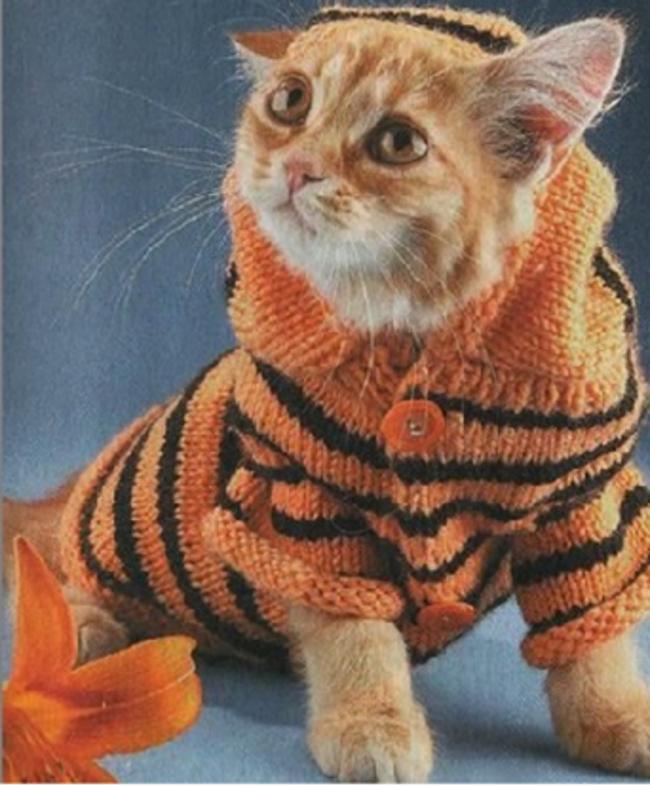 Маленький тигр  кардиган, кот