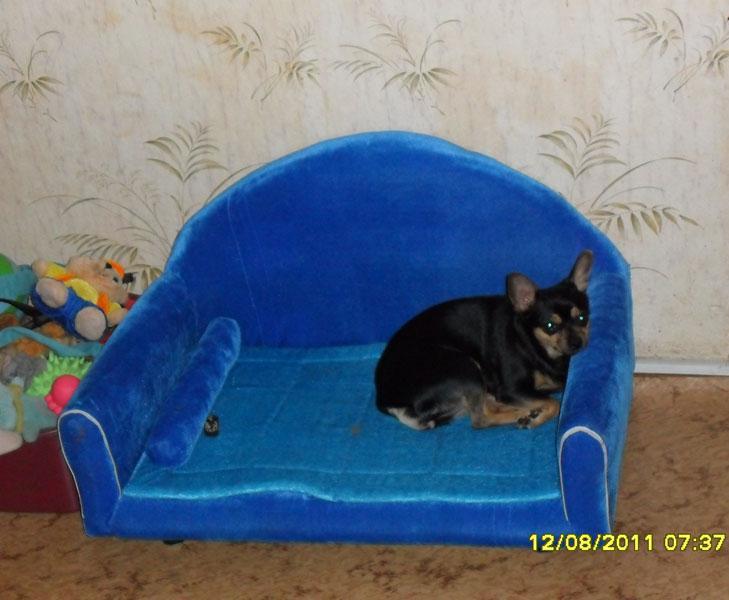 Своими руками диванчик для собак