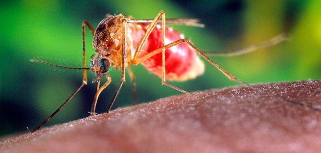 Народные средства от комаров…