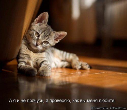 Лучшая котоматрица (34 фото)