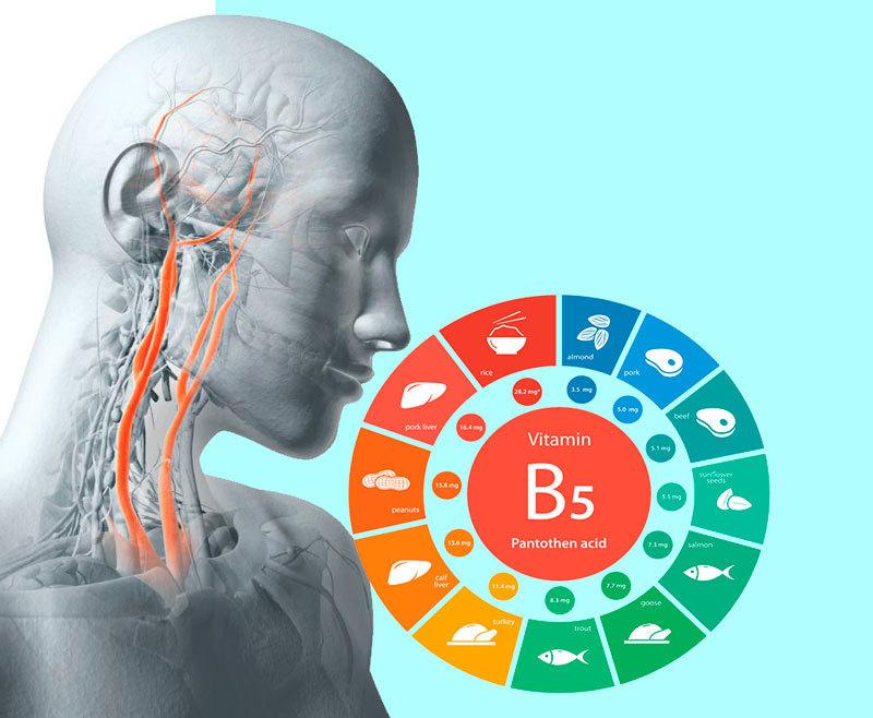 Польза пантотеновой кислоты для организма
