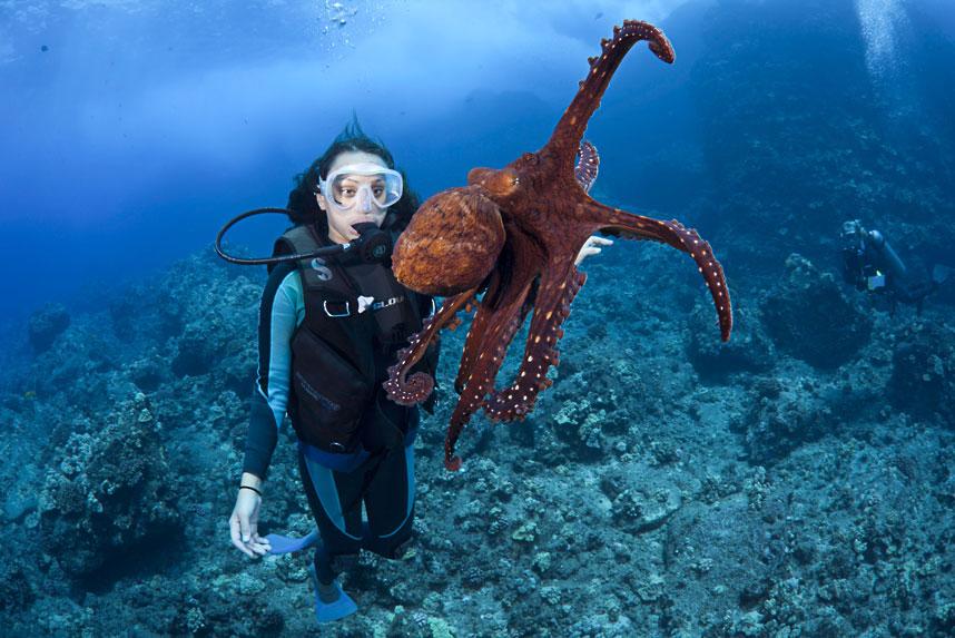 4104 Жизнь в океане   подводные фотографии Дэвида Флитэма
