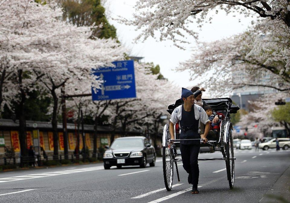 традиция любования цветущей сакурой-8