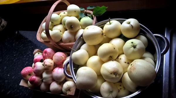 ...и, конечно, яблоки...