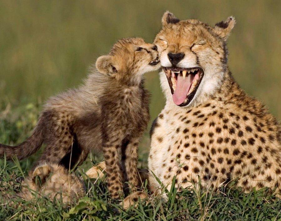 дети и мамы