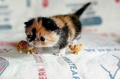 Такие милые детёныши животных