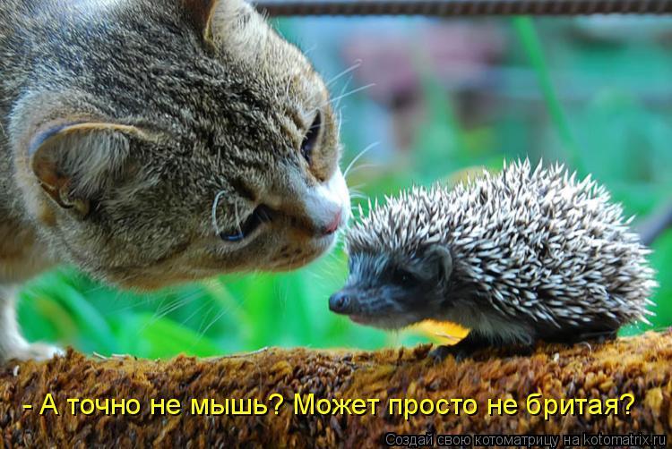 Котоматрица: - А точно не мышь? Может просто не бритая?