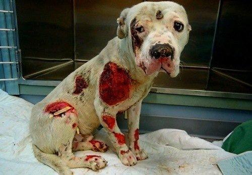 Эта собака пострадала от сво…