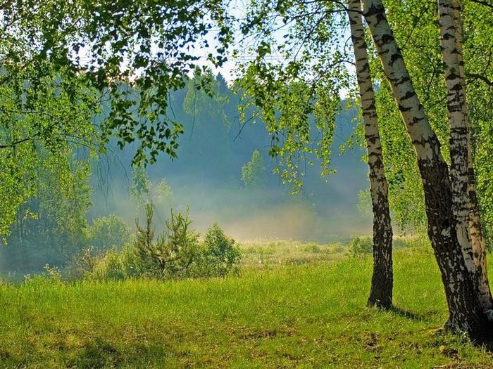 Лес у Славян