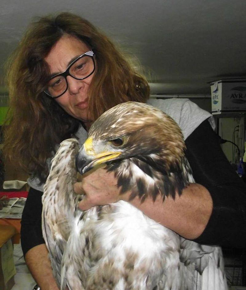 Волонтерский центр по спасению диких животных в Греции