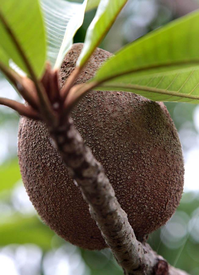 346 Экзотические фрукты