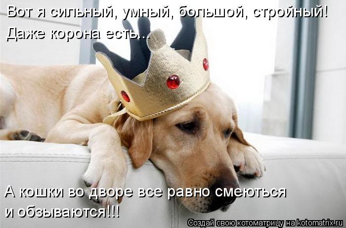 Котоматрица: Вот я сильный, умный, большой, стройный! Даже корона есть... и обзываются!!! А кошки во дворе все равно смеються