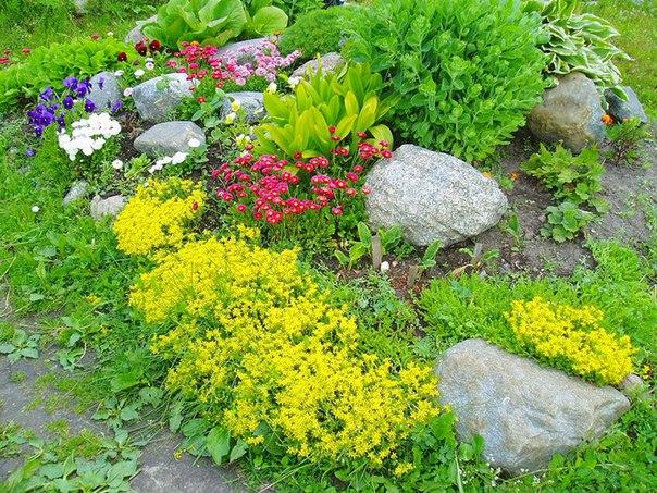 Альпийские горки самоцветик