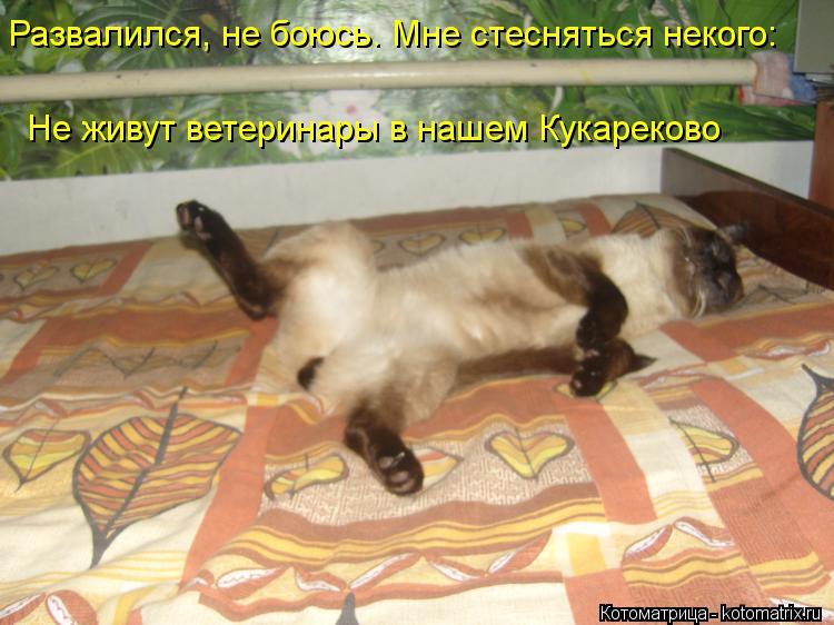 Котоматрица: Развалился, не боюсь. Мне стесняться некого: Не живут ветеринары в нашем Кукареково