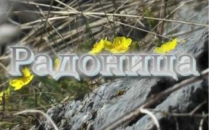 Документальное кино авторское арт-хаус смотреть онлайн лекции Студия Маслобойка