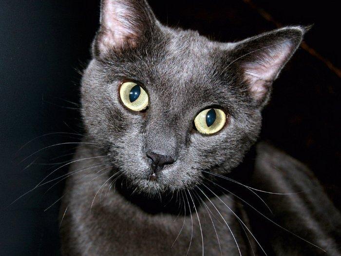 черных кошек Кошки Кот Коты cats chernaya koshka 1 1600