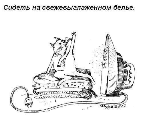 Смешные правила для кошек