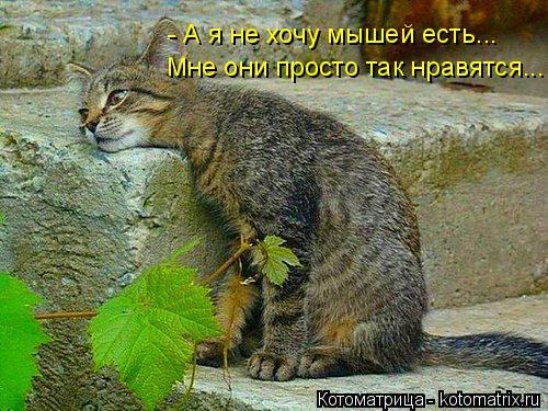 Котоматрица: - А я не хочу мышей есть... Мне они просто так нравятся...
