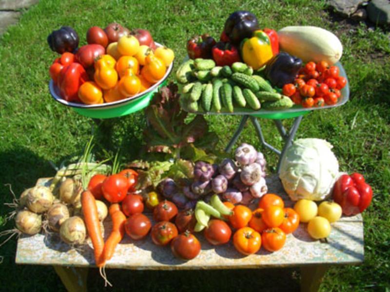 Чтобы получить большой урожай, меняем грядки местами