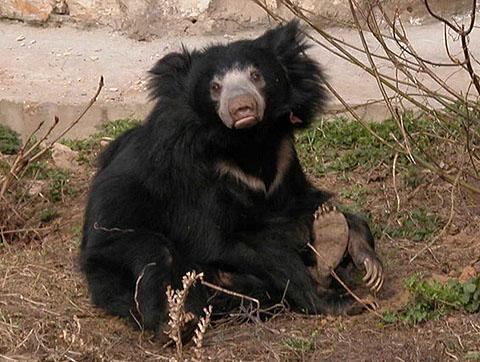 ТЕРЕМОК. Самые красивые медведи