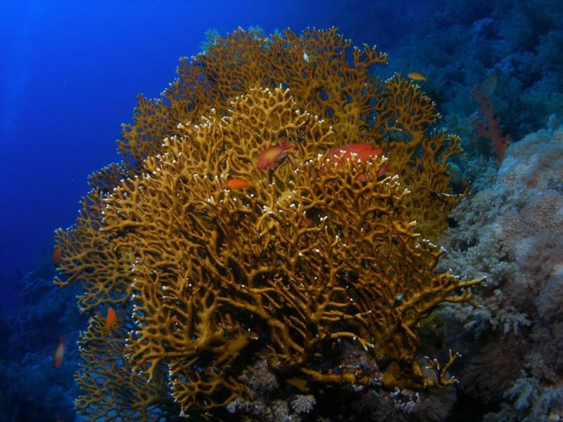 Миллепоры животные, интересное, море, опасность, подборка, факты, фауна