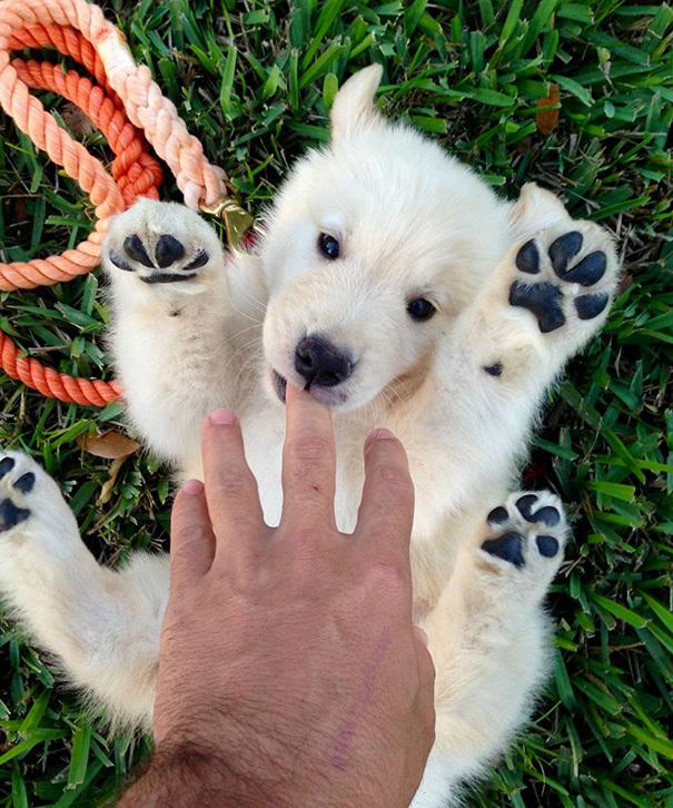 Милые собаки, которые выгляд…