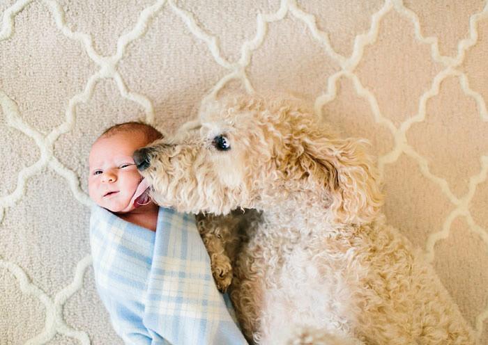 Без поцелуев не обойтись  дружба, ребенок, собака