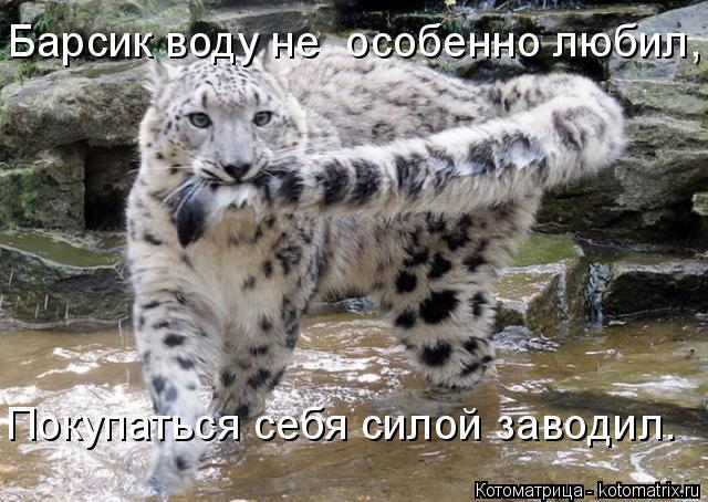 Котоматрица: Барсик воду не  особенно любил, Покупаться себя силой заводил.