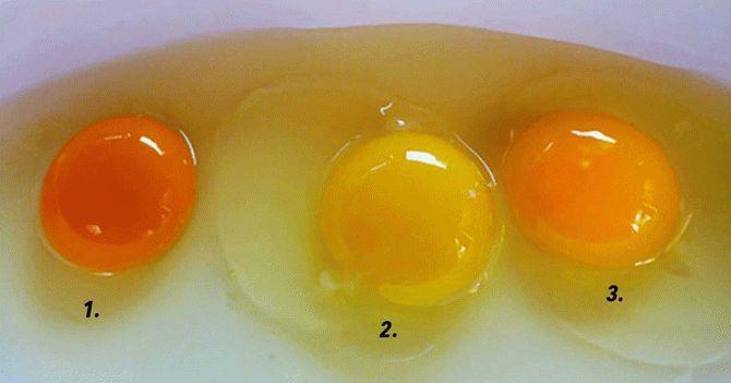 Какого цвета яичные желтки у…