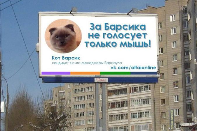 В Барнауле набирает обороты предвыборная кампания кота Барсика